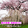 Sakura2017_3
